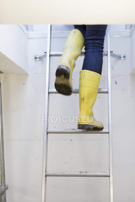 Person wearing boots while moving up ladder — Stock Photo