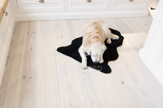 Dog relaxing on rug — Stock Photo