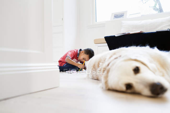 Junge lernt mit Hund im Wohnzimmer — Stockfoto