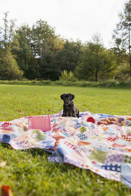Schwarzen Welpen auf der Picknickdecke — Stockfoto