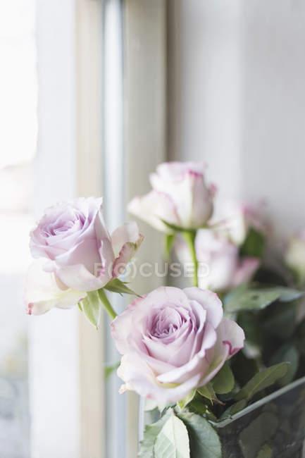 Троянди рожеві вікна в ресторані — стокове фото