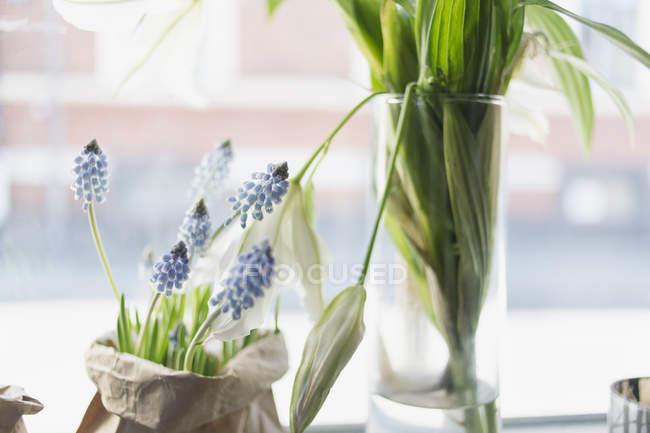 Растения против окон — стоковое фото