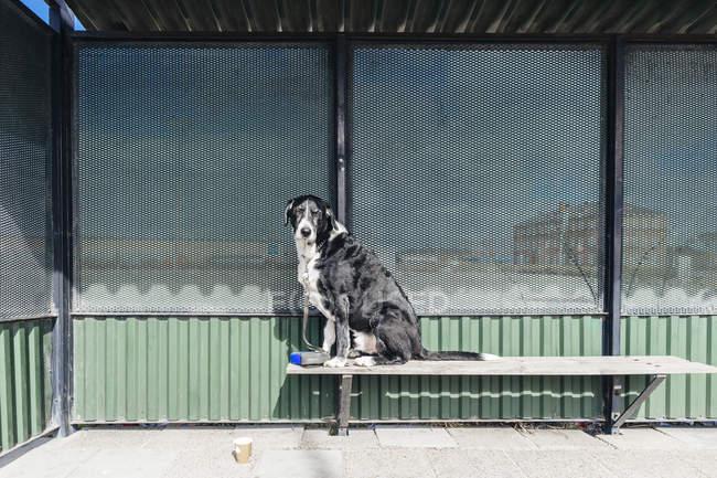 Portrait de chien métis — Photo de stock