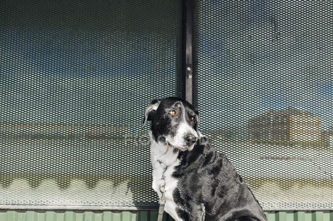Mischlingshund, im Freien — Stockfoto