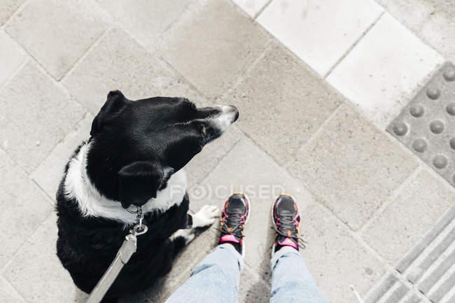 Человек, стоящий со смешанной породой собак — стоковое фото