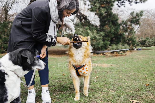 Счастливая женщина играет с Евразьером — стоковое фото