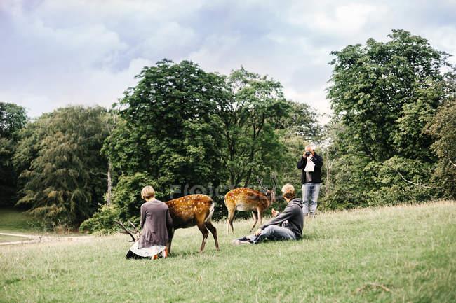 Persone con cervi in campo erboso — Foto stock