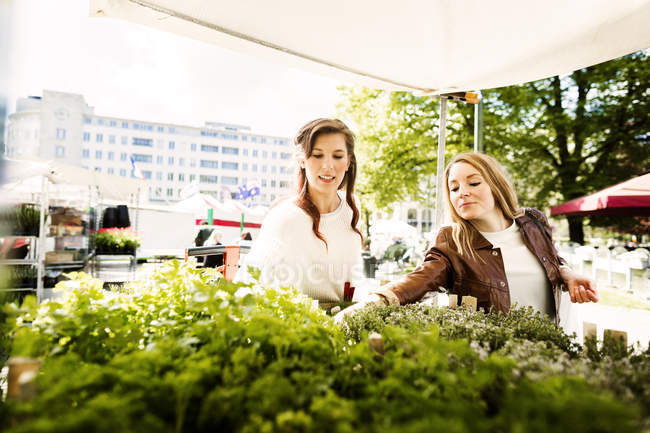 Women buying plants — Stock Photo