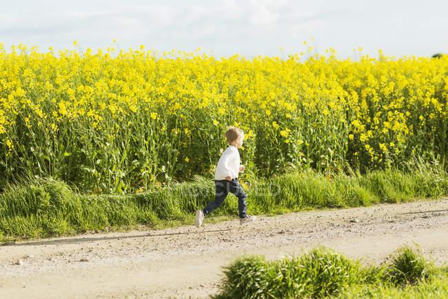 Estrada de terra no campo de colza — Fotografia de Stock