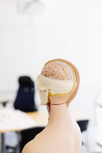 Model of human head — Stock Photo