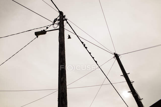 Silhouette birds perching on power lines — Stock Photo