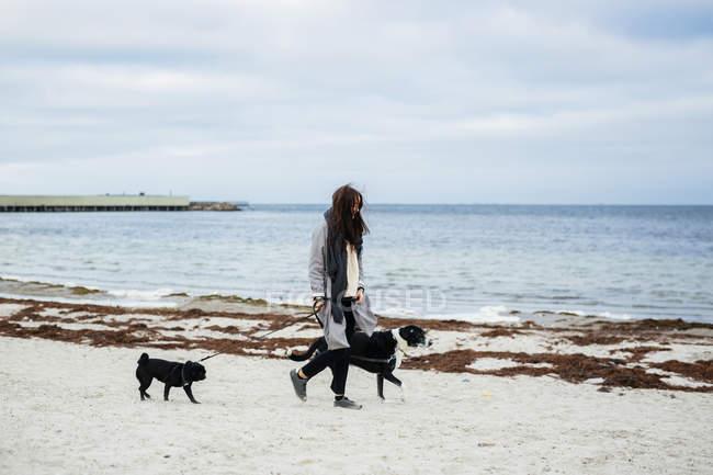 Женщина гуляет с собаками — стоковое фото