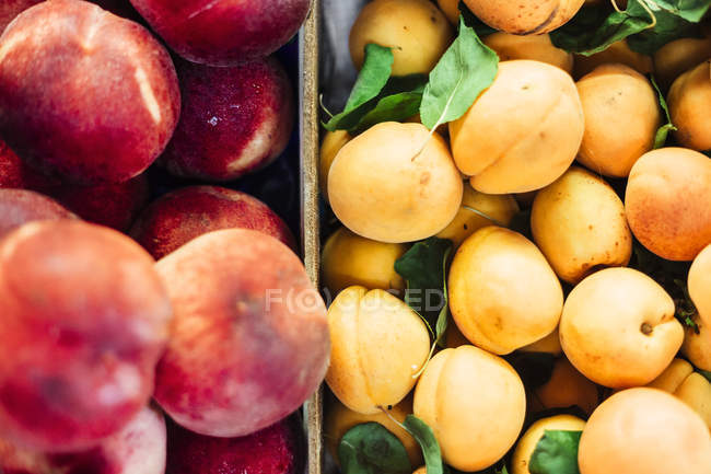 Peaches and apricots for sale — Stock Photo