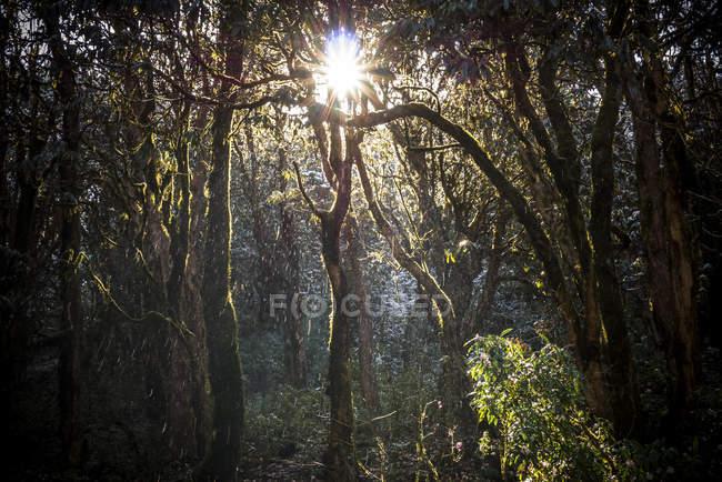 Rhododendronbäume wachsen im Wald — Stockfoto