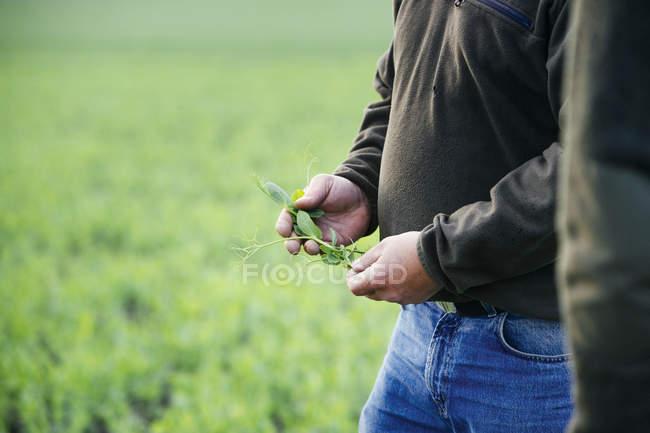 Farmer holding plants on field — Stock Photo
