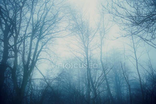 Краєвид з голі дерева — стокове фото