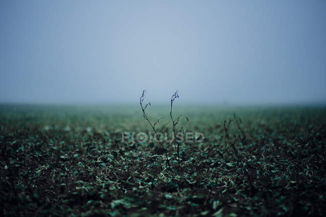 Plants growing on ground — Stock Photo