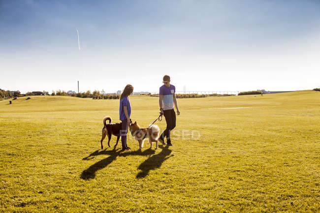 Пара с собаками в парке — стоковое фото