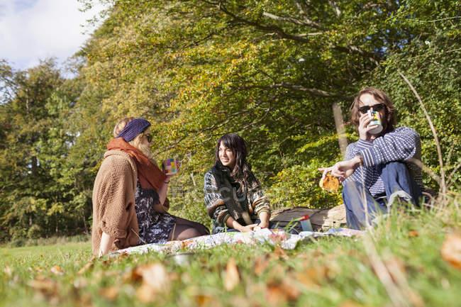 Друзья устраивают пикник в лесу — стоковое фото