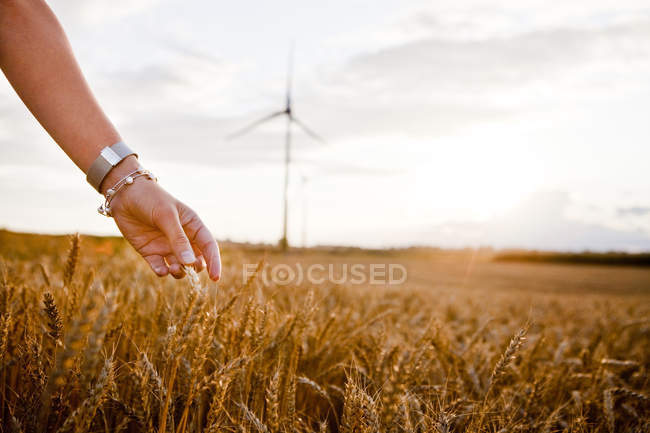 Жінка, торкаючись урожай пшениці на полі — стокове фото