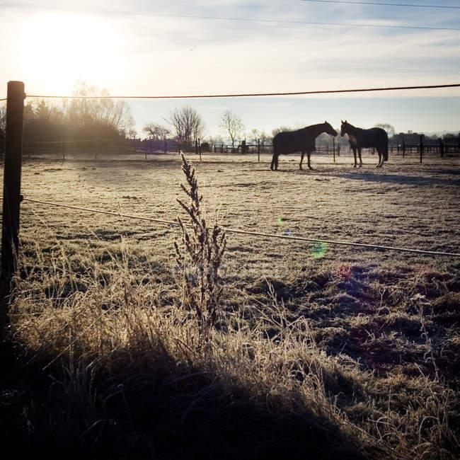 Коней, стоячи на поле — стокове фото