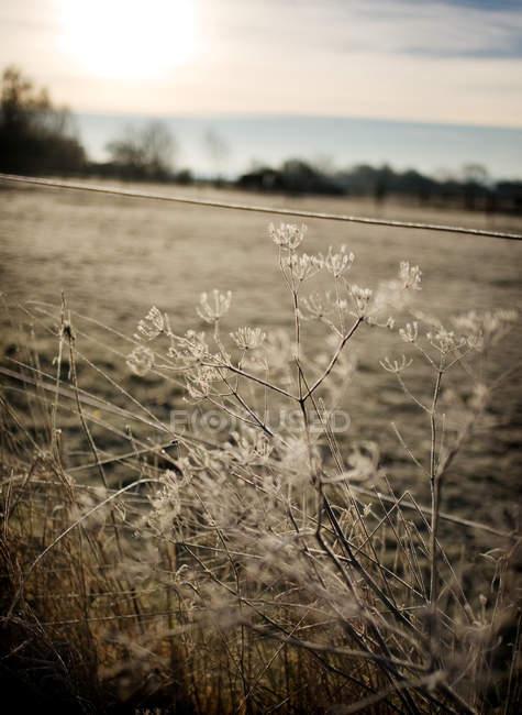 Сніг накривав рослин на полі — стокове фото