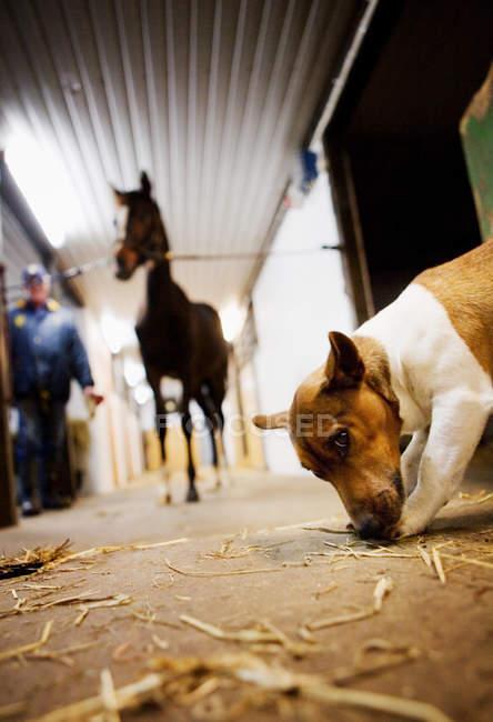 Persona con cavallo e cane — Foto stock