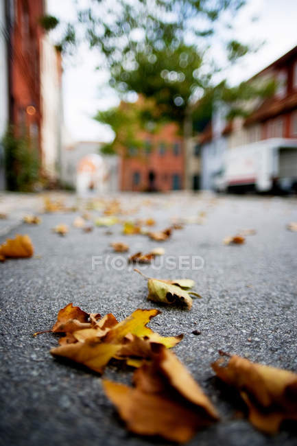 Dry leaves on street — Stock Photo