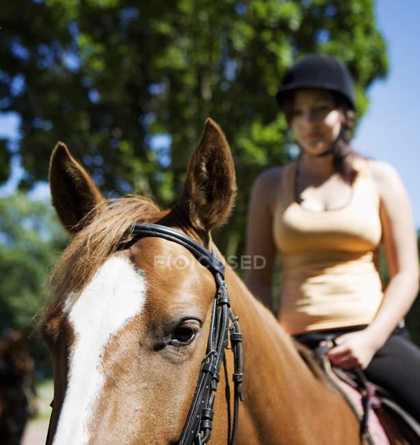 Vista cortada de mulher equitação cavalo no dia ensolarado — Fotografia de Stock
