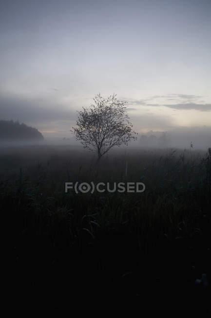 Деревья на поле в туманной погоды — стоковое фото