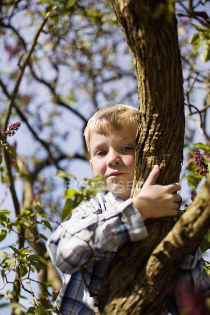 Портрет мальчика, сидящего на ветке дерева — стоковое фото