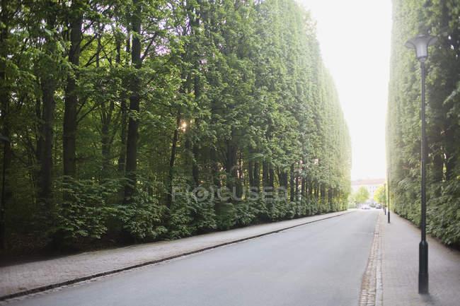 Дорога среди деревьев — стоковое фото