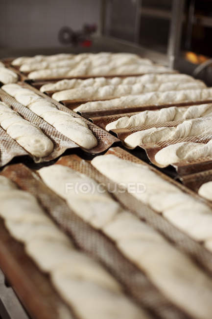 Fresh baguette dough on baking sheets — Stock Photo