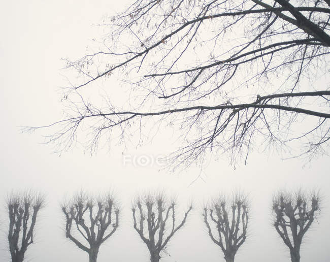 Bare trees in foggy weather — Stock Photo