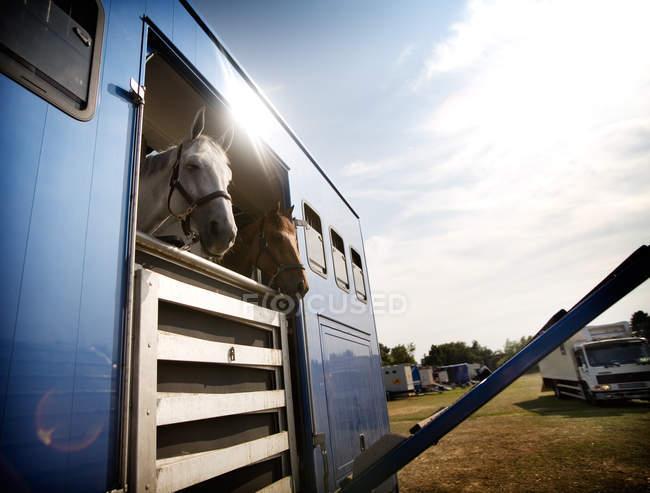 Cavalli in rimorchio sul campo — Foto stock