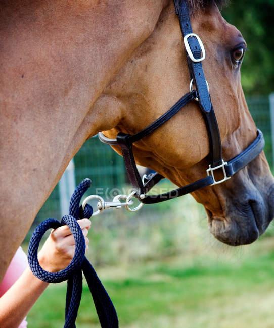 Канат, прилагается к уздечке лошади — стоковое фото