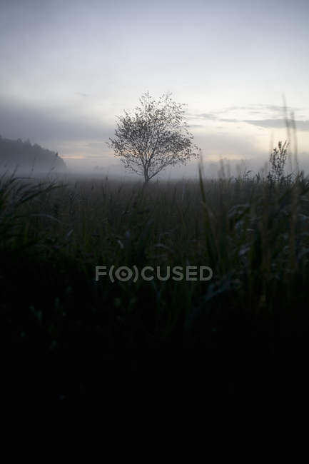 Tree on field in foggy weather — Stock Photo