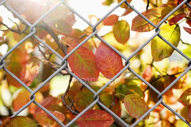 Осенние листья через цепной забор — стоковое фото