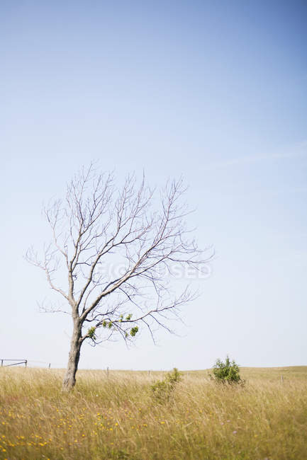 Bare tree on grassy field — Stock Photo