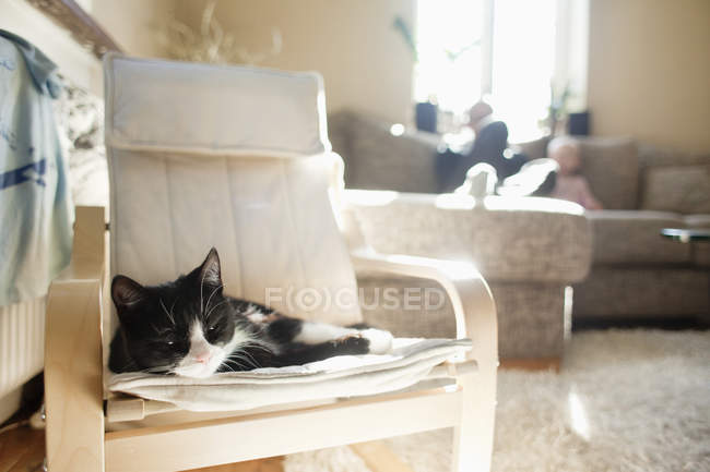 Cat relaxing on armchair — Stock Photo