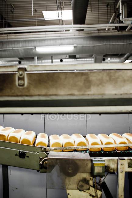 Хліб Короваї на конвеєрі — стокове фото