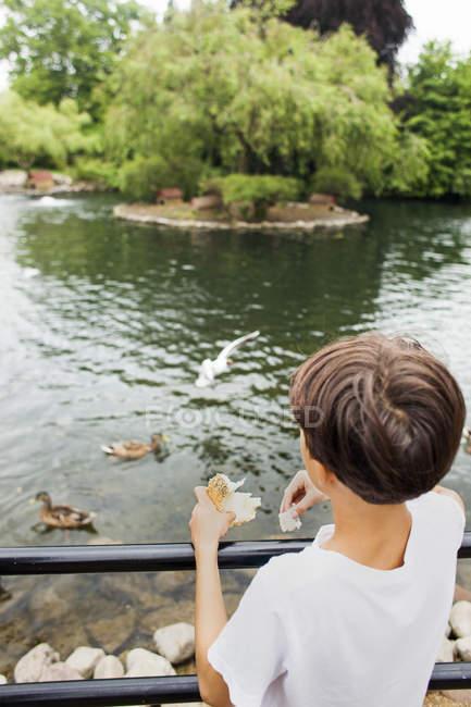 Boy feeding birds — Stock Photo