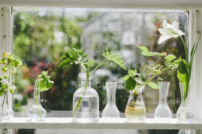 Plants in glass vase — Stock Photo