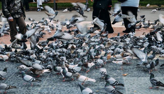Gens de nourrir les pigeons — Photo de stock