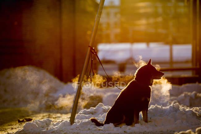 Canis lupus familiaris — Photo de stock