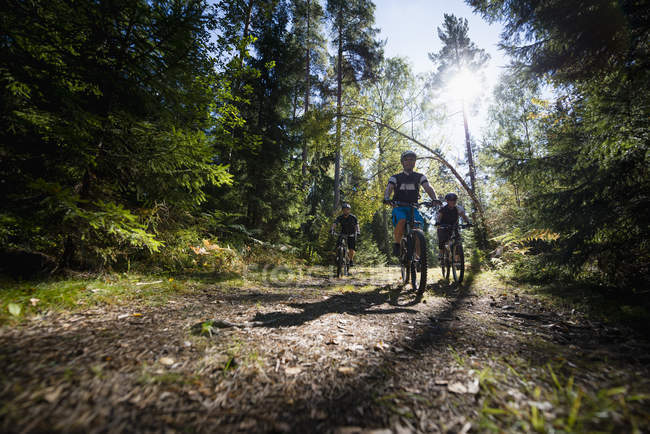 Männer mit Fahrrad im Wald — Stockfoto