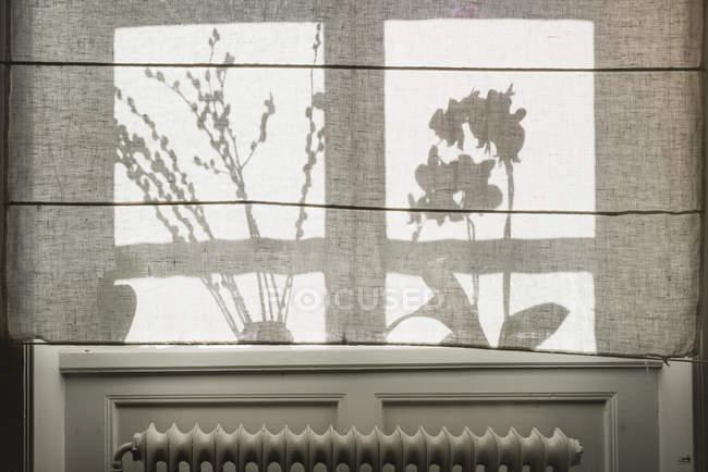 Siluetas de plantas detrás de la cortina - foto de stock