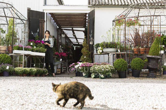 Цветочный магазин — стоковое фото
