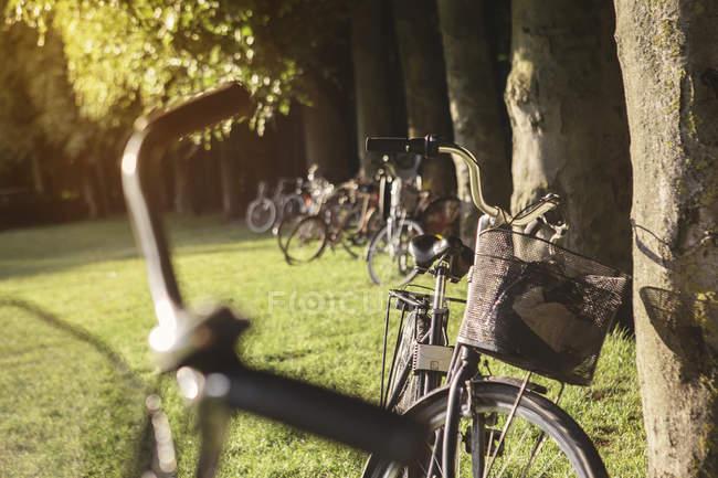 Bicicletas estacionado no Prado sob árvores no parque — Fotografia de Stock