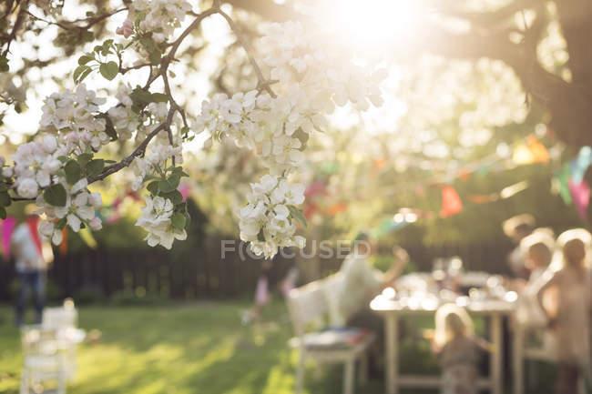 Цветущая ветка дерева с несосредоточенной семьей, сидящей за обеденным столом в саду — стоковое фото
